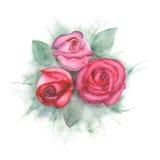 Vattenfärgmålning med rosa rosor Royaltyfria Foton