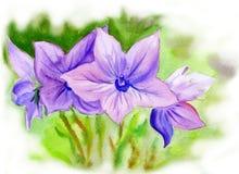 Vattenfärgmålningklockblomma, blommor Fotografering för Bildbyråer