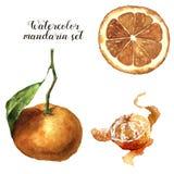 Vattenfärgmandarinuppsättning Citrus samling på vit bakgrund för design, tyg eller tryck vektor illustrationer