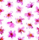 Vattenfärgmodell med rosa blommor Sömlös hand dragen blom- bakgrund Arkivbilder
