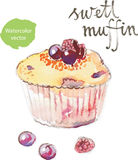 Vattenfärgmuffin royaltyfri illustrationer