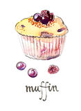 Vattenfärgmuffin med frukter stock illustrationer