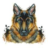 Vattenfärgprintshopen, tryck på temat av aveln av hundkapplöpning, däggdjur, djur, föder upp den tyska herden, ståenden, färgröd- stock illustrationer