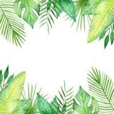 Vattenfärgram av färgrika tropiska sidor Begrepp av djungeln för designen av inbjudningar, hälsningkort Stock Illustrationer