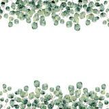 Vattenfärgram med eukalyptussilverdollaren botanisk design stock illustrationer