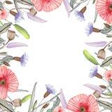 Vattenfärgram med vallmo och blåa blommor på en vit bakgrund stock illustrationer