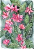 Vattenfärgrosa färgen blommar blom- texturbakgrund för bladet Royaltyfri Foto