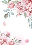 Vattenfärgrosa färger, rosa pioner med grå färggräs på vit backgroun arkivbild