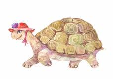 Vattenfärgsköldpadda, vektorillustration Royaltyfria Bilder