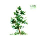 Vattenfärgsommarträd stock illustrationer
