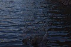 Vattenfärgstänk i floden arkivbild
