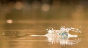 Vattenfärgstänk på färgrik bakgrund för skönhet royaltyfri foto