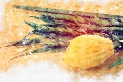Vattenfärgstil och abstrakt bild av den judiska festivalen av Sukkot Traditionella symboler den fyra arten: Etrog lulav, hadas, m Royaltyfria Bilder