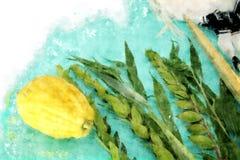 Vattenfärgstil och abstrakt bild av den judiska festivalen av Sukkot Traditionella symboler den fyra arten: Etrog lulav, hadas, m Arkivbilder
