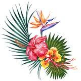 Vattenfärgstilillustration med exotiska blommor och blad Botanisk ljus natursamling som isoleras på vit bakgrund Arkivfoto