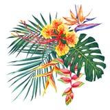 Vattenfärgstilillustration med exotiska blommor och blad Botanisk ljus natursamling som isoleras på vit bakgrund Royaltyfria Bilder
