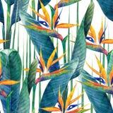 Vattenfärgstrelitziamodell stock illustrationer