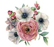 Vattenfärgsuckulent-, ranunculus- och anemonbukett Hand målad blommor, eucaliptussidor, bär och suckulent royaltyfri illustrationer