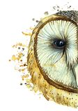 : vattenfärgteckning av en djur rovdjurs- fågeluggla, gemensam uggla, stående av en uggla, vit uggla, fjädrar, vit bakgrund för d vektor illustrationer