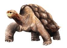 Vattenfärgteckning av ett djurt - Abingdon Galapagos sköldpadda vektor illustrationer