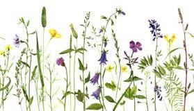 Vattenfärgteckningsväxter royaltyfri illustrationer