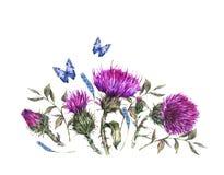 Vattenfärgtistel, blåa fjärilar, illustration för lösa blommor, kort för hälsning för ängörttappning vektor illustrationer