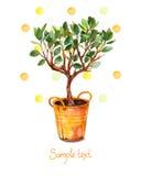 Vattenfärgträd i kruka med vattenfärgfärgstänk också vektor för coreldrawillustration Fjädra den tid… ron lämnar, naturlig bakgru Fotografering för Bildbyråer