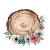Vattenfärgtvärsnitt av ett träd med blommabuketten Räcka den målade anemonen, ranunculusen, eucaliptussidor och stock illustrationer