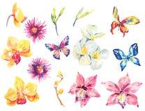 Vattenfärguppsättning av blom- tropiska orkidébeståndsdelar Fotografering för Bildbyråer