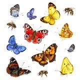 Vattenfärguppsättning av fjärilar och bin Arkivbilder