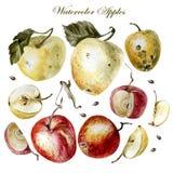 Vattenfärguppsättning med äpplen på en vit bakgrund Royaltyfri Bild