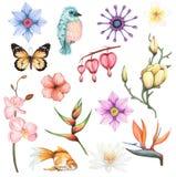 Vattenfärguppsättning med exotiska blommor och den djura beståndsdelen arkivfoton
