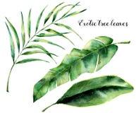 Vattenfärguppsättning med exotiska trädsidor Den målade handen gömma i handflatan filialen och bladet av magnolian Vändkretsväxt  stock illustrationer