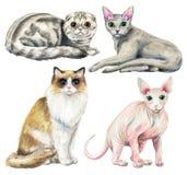 Vattenfärguppsättning med fyra olika avel av katter stock illustrationer