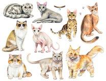 Vattenfärguppsättning med nio olika avel av katter stock illustrationer