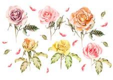 Vattenfärguppsättning med olika rosor Royaltyfria Bilder