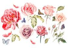 Vattenfärguppsättning med olika rosor Arkivfoto