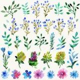 Vattenfärguppsättning med sidor och blommor Hand dragen växt Arkivbild