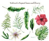 Vattenfärguppsättning med tropiska sidor Den målade handen gömma i handflatan filialen, ormbunken och bladet av magnolian Vändkre Royaltyfri Bild