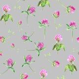 Vattenfärgväxt av släktet Trifolium som isoleras på grå färger Försiktig sömlös modell med att blomma rosa växt av släktet Trifol vektor illustrationer
