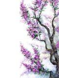 Vattenfärgvårbakgrund Lilan blommar på trädfilialer