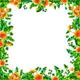 Vattenfärgvårmaskrosen blommar, blomningfyrkantramen Arkivfoto