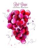 Vattenfärgvektor för röda druvor Målade färgstänkstilillustrationer royaltyfri illustrationer