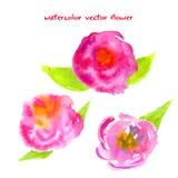 Vattenfärgvektorblommor Royaltyfri Illustrationer