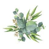 Vattenfärgvektorbuketten med den gröna eukalyptuns lämnar och förgrena sig royaltyfri illustrationer
