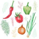 Vattenfärgvektorgrönsaker fastställd tomat, peppar och lök Arkivbild