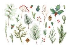 Vattenfärgvektorjul ställde in med vintergröna barrträdfilialer, bär och sidor