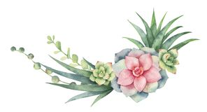 Vattenfärgvektorkrans av kakturs och suckulentväxter som isoleras på vit bakgrund stock illustrationer