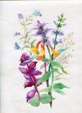 Vattenfärgvildblommor och gräs royaltyfri illustrationer