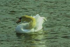 Vattenfågel- och vattendroppe royaltyfri foto